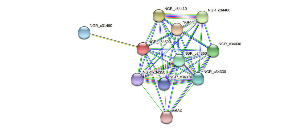 NGR_c34390 protein (Sinorhizobium fredii NGR234) - STRING interaction network