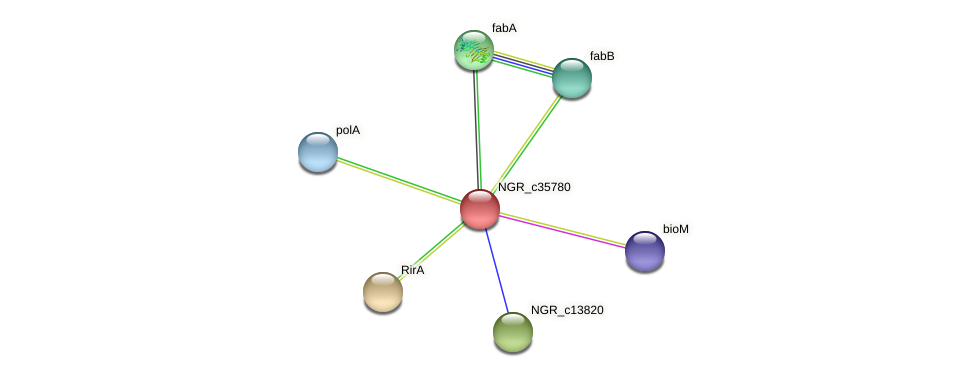 NGR_c35780 protein (Sinorhizobium fredii NGR234) - STRING interaction network