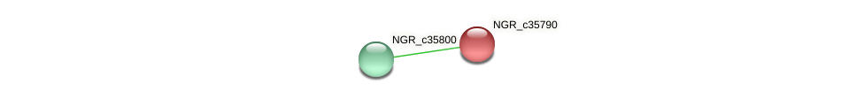 NGR_c35790 protein (Sinorhizobium fredii NGR234) - STRING interaction network