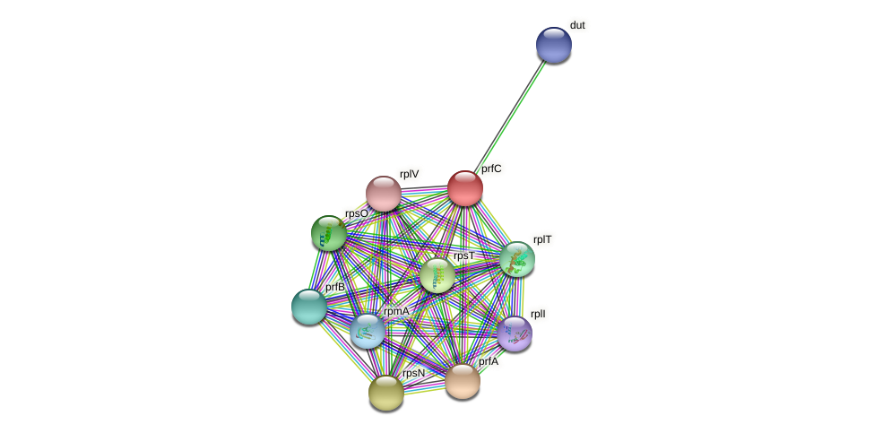 prfC protein (Sinorhizobium fredii NGR234) - STRING interaction network