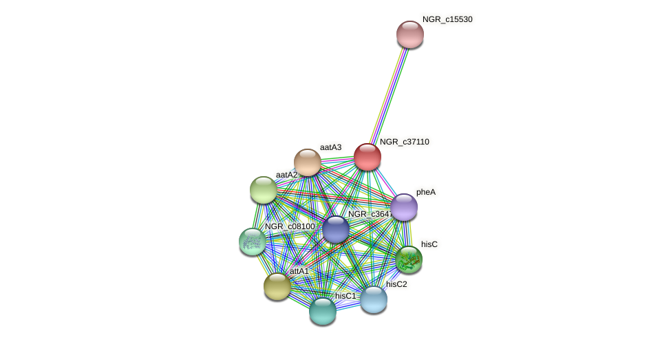 NGR_c37110 protein (Sinorhizobium fredii NGR234) - STRING interaction network