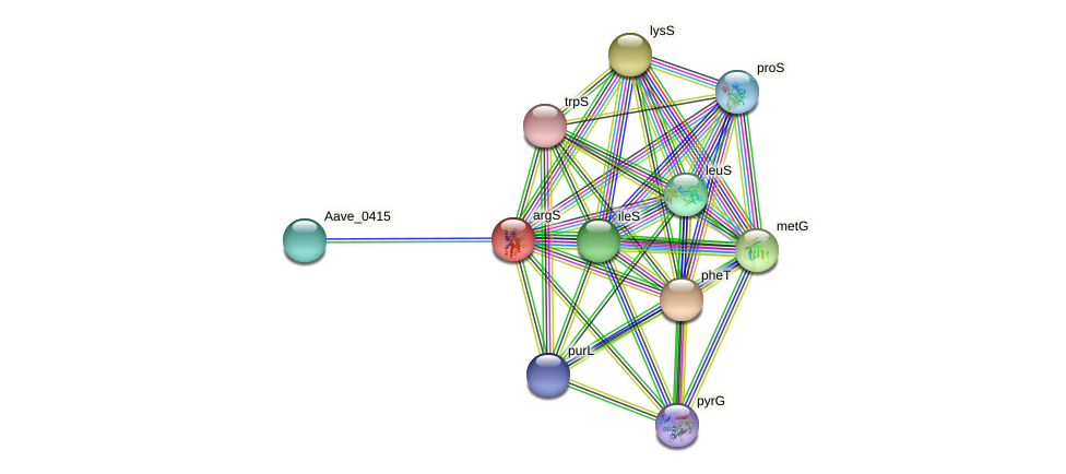 argS protein (Acidovorax citrulli) - STRING interaction network