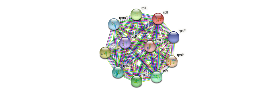 rplI protein (Petrotoga mobilis) - STRING interaction network