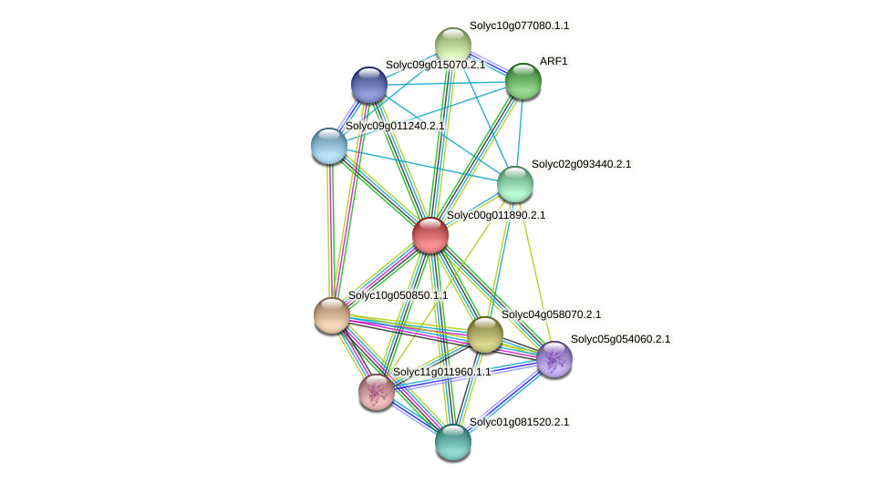 Solyc00g011890.2.1 protein (Solanum lycopersicum) - STRING interaction network