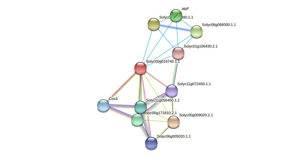 Solyc00g019740.1.1 protein (Solanum lycopersicum) - STRING interaction network