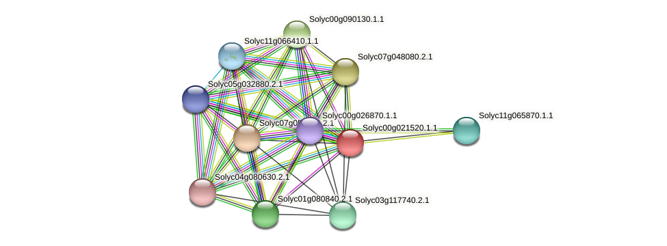 Solyc00g021520.1.1 protein (Solanum lycopersicum) - STRING interaction network