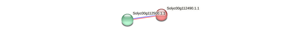 Solyc00g112490.1.1 protein (Solanum lycopersicum) - STRING interaction network