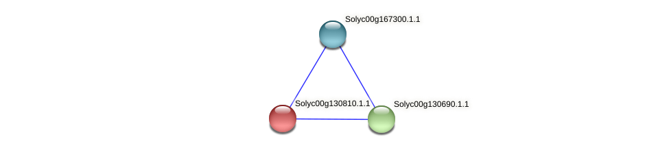 Solyc00g130810.1.1 protein (Solanum lycopersicum) - STRING interaction network