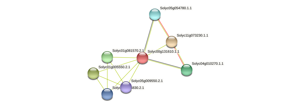 Solyc00g131610.1.1 protein (Solanum lycopersicum) - STRING interaction network