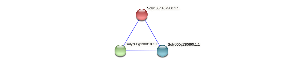 Solyc00g167300.1.1 protein (Solanum lycopersicum) - STRING interaction network