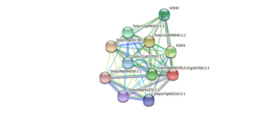 Solyc00g187050.2.1 protein (Solanum lycopersicum) - STRING interaction network