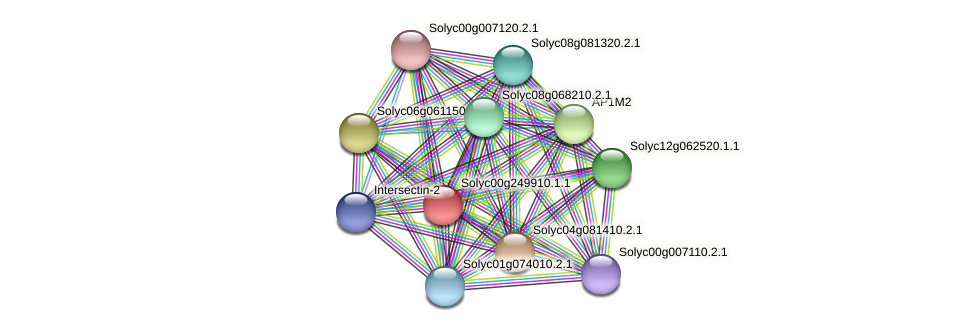 Solyc00g249910.1.1 protein (Solanum lycopersicum) - STRING interaction network