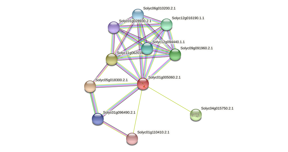 101262550 protein (Solanum lycopersicum) - STRING interaction network