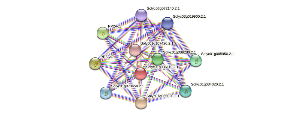 Solyc01g006110.2.1 protein (Solanum lycopersicum) - STRING interaction network