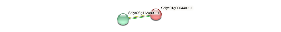 Solyc01g006440.1.1 protein (Solanum lycopersicum) - STRING interaction network