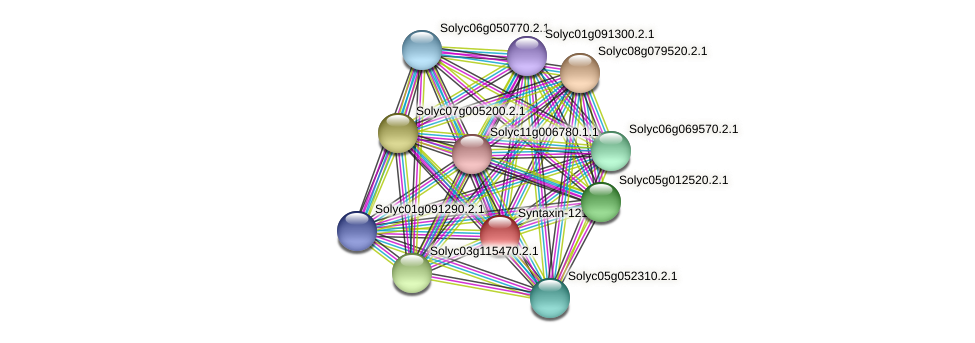 Solyc01g006950.2.1 protein (Solanum lycopersicum) - STRING interaction network