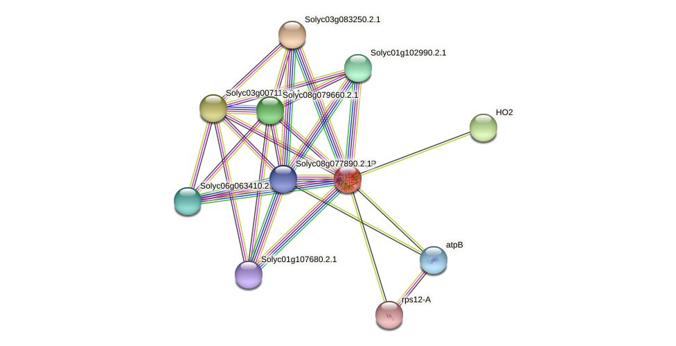 clpP protein (Solanum lycopersicum) - STRING interaction network
