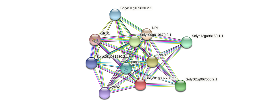 Solyc01g007760.2.1 protein (Solanum lycopersicum) - STRING interaction network