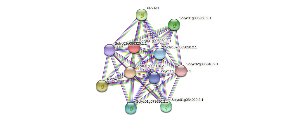 Solyc01g008280.2.1 protein (Solanum lycopersicum) - STRING interaction network