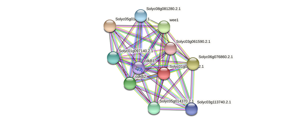 101253308 protein (Solanum lycopersicum) - STRING interaction network