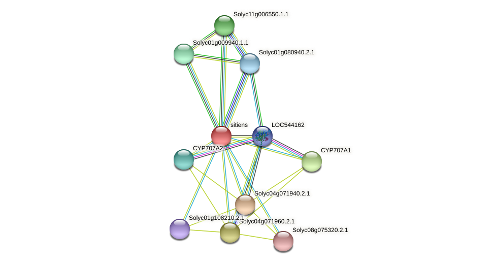 sitiens protein (Solanum lycopersicum) - STRING interaction network