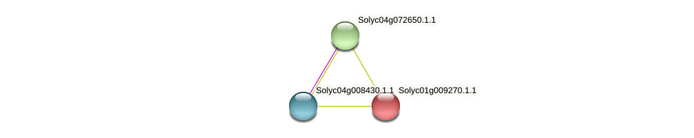 Solyc01g009270.1.1 protein (Solanum lycopersicum) - STRING interaction network