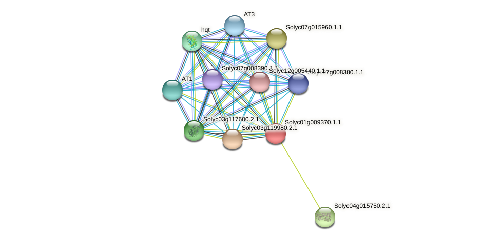 Solyc01g009370.1.1 protein (Solanum lycopersicum) - STRING interaction network