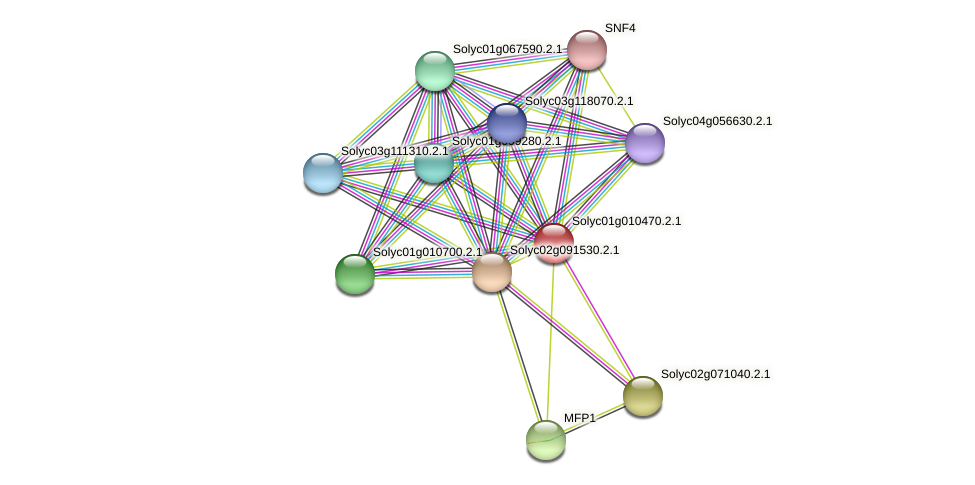 Solyc01g010470.2.1 protein (Solanum lycopersicum) - STRING interaction network