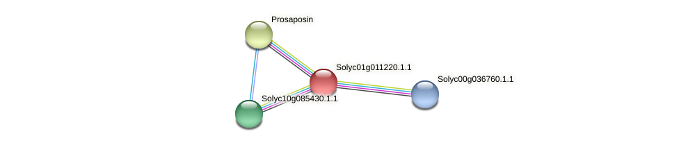 Solyc01g011220.1.1 protein (Solanum lycopersicum) - STRING interaction network
