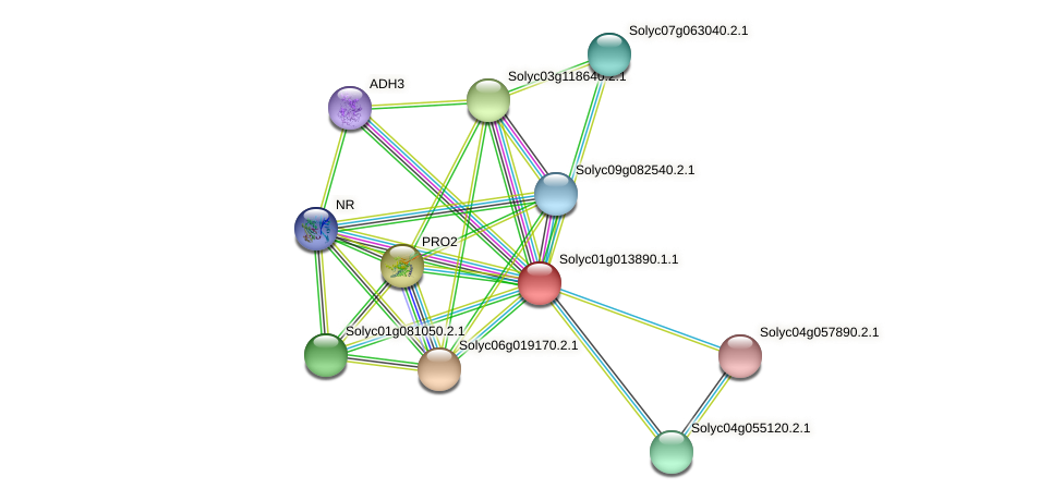 Solyc01g013890.1.1 protein (Solanum lycopersicum) - STRING interaction network