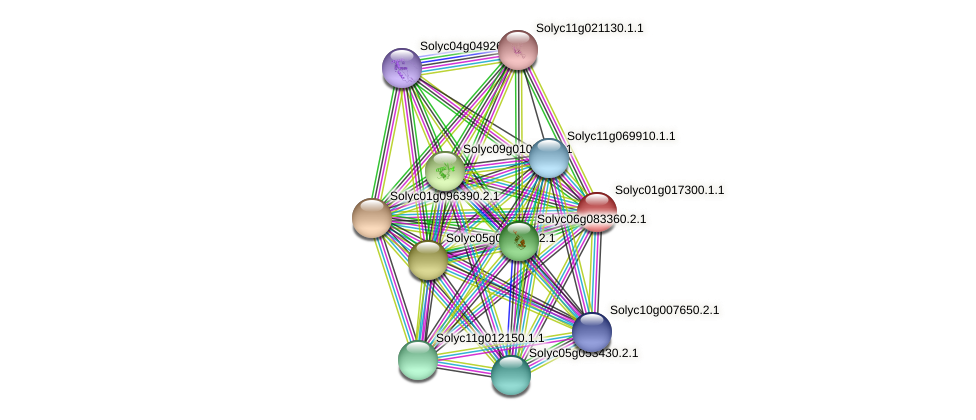 Solyc01g017300.1.1 protein (Solanum lycopersicum) - STRING interaction network