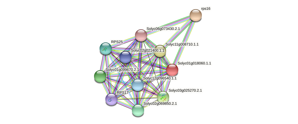 Solyc01g018060.1.1 protein (Solanum lycopersicum) - STRING interaction network