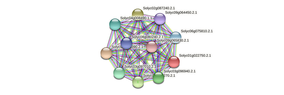 Solyc01g022750.2.1 protein (Solanum lycopersicum) - STRING interaction network