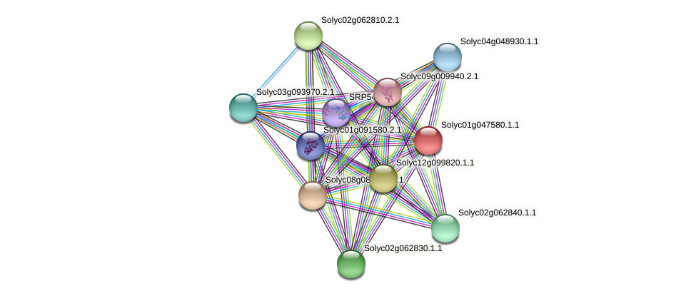 Solyc01g047580.1.1 protein (Solanum lycopersicum) - STRING interaction network