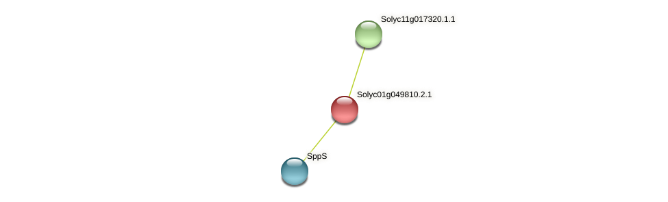 Solyc01g049810.2.1 protein (Solanum lycopersicum) - STRING interaction network