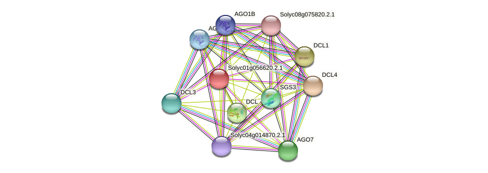 Solyc01g056620.2.1 protein (Solanum lycopersicum) - STRING interaction network