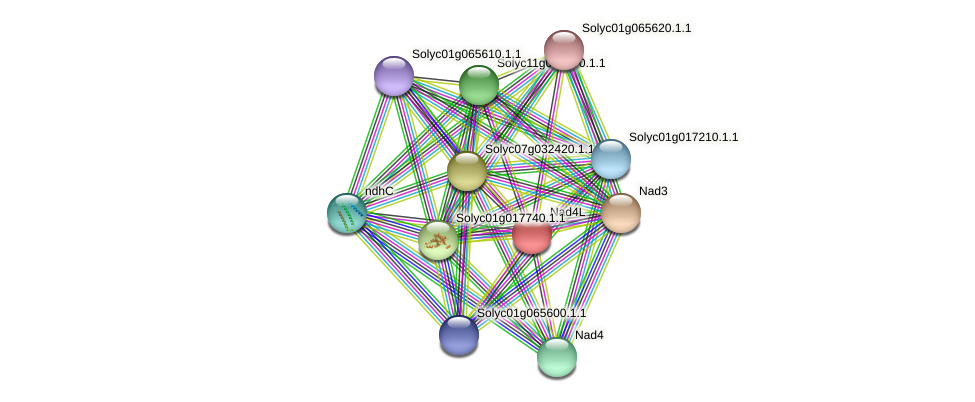 Solyc01g056670.1.1 protein (Solanum lycopersicum) - STRING interaction network