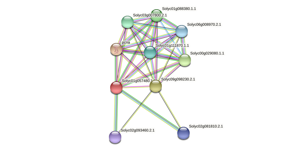 Solyc01g057480.1.1 protein (Solanum lycopersicum) - STRING interaction network