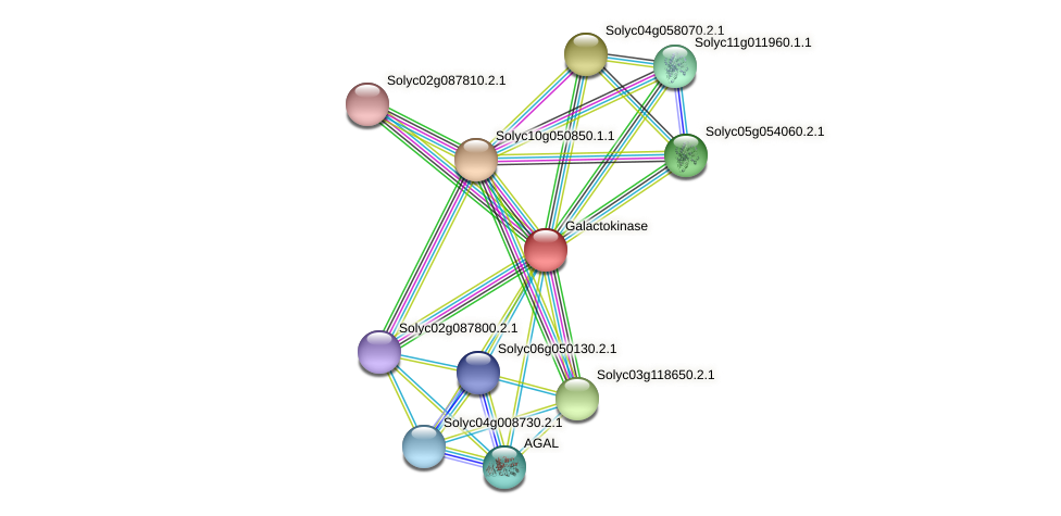 101267552 protein (Solanum lycopersicum) - STRING interaction network