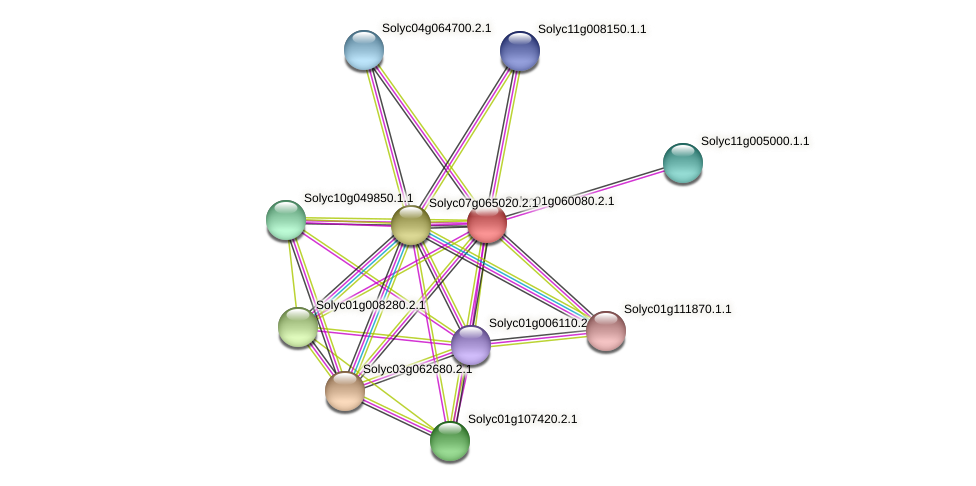 Solyc01g060080.2.1 protein (Solanum lycopersicum) - STRING interaction network
