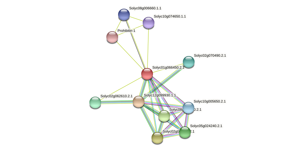 Solyc01g066450.2.1 protein (Solanum lycopersicum) - STRING interaction network