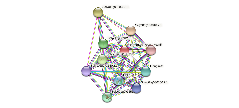 Solyc01g067270.2.1 protein (Solanum lycopersicum) - STRING interaction network