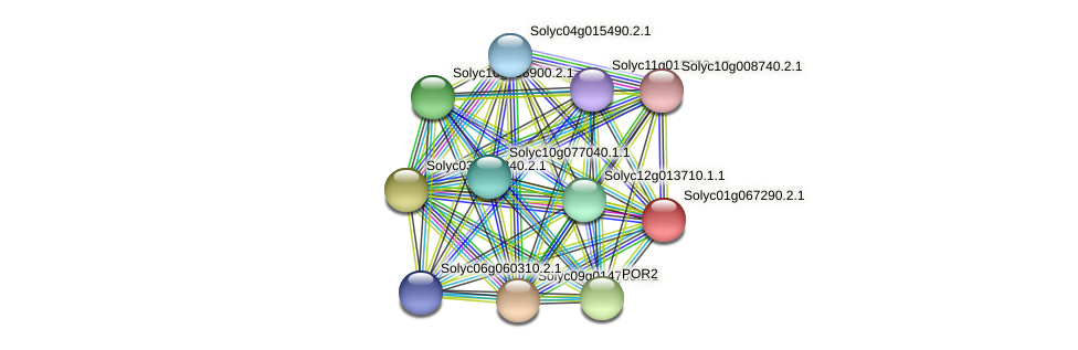 Solyc01g067290.2.1 protein (Solanum lycopersicum) - STRING interaction network