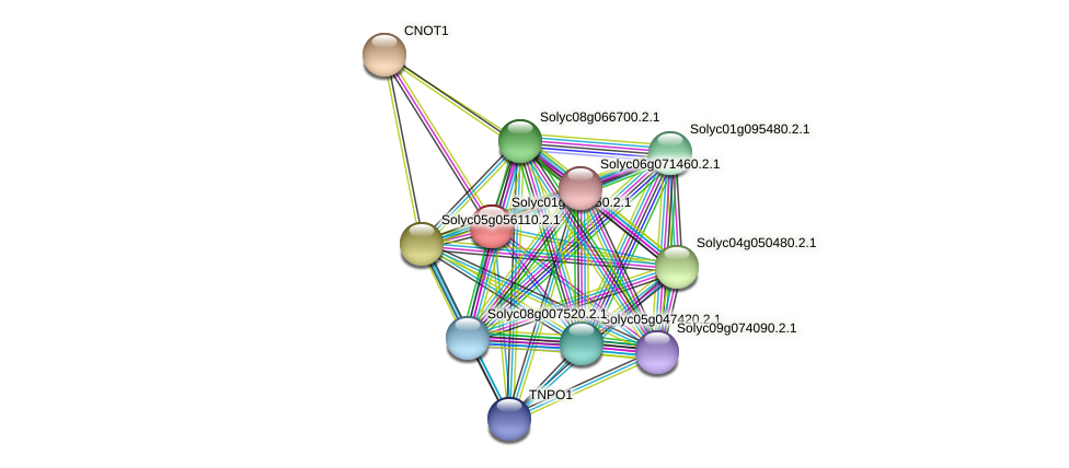 101268508 protein (Solanum lycopersicum) - STRING interaction network