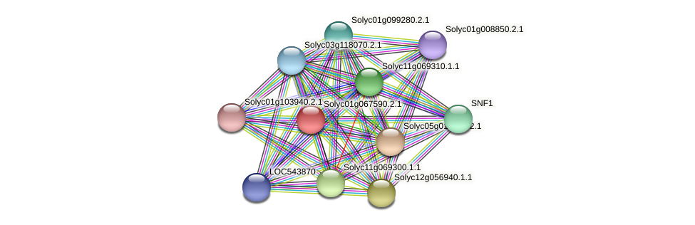 Solyc01g067590.2.1 protein (Solanum lycopersicum) - STRING interaction network