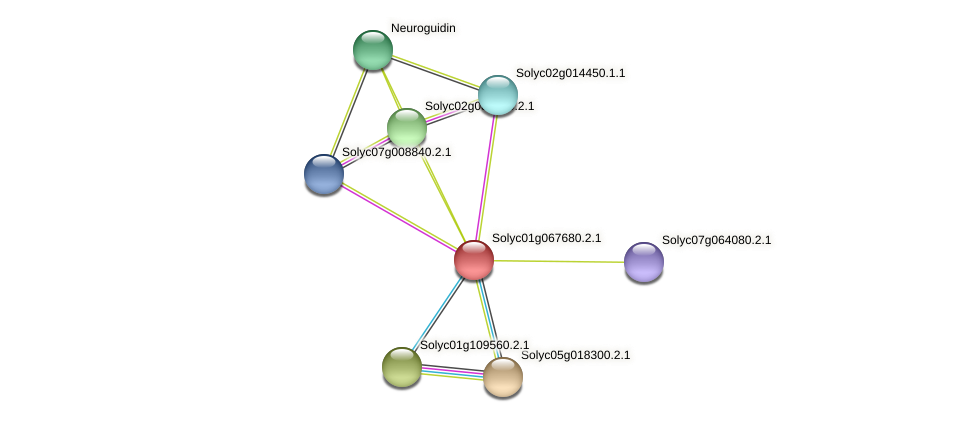 Solyc01g067680.2.1 protein (Solanum lycopersicum) - STRING interaction network