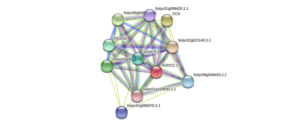 SODCC.1 protein (Solanum lycopersicum) - STRING interaction network