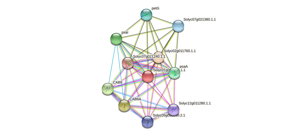 LyesC2p049 protein (Solanum lycopersicum) - STRING interaction network