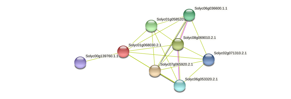 Solyc01g068030.2.1 protein (Solanum lycopersicum) - STRING interaction network