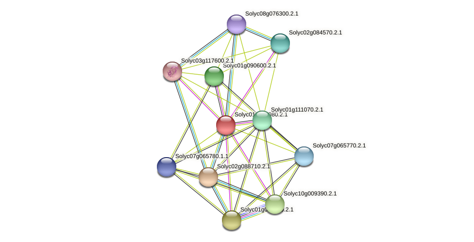 Solyc01g068080.2.1 protein (Solanum lycopersicum) - STRING interaction network